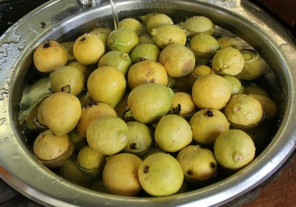 Guavas being washed and prepped for freezing