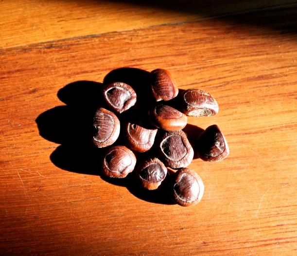 Eleven seeds.
