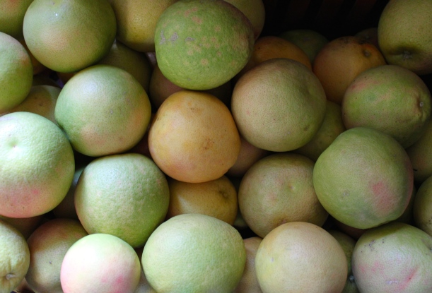 Harvested grapefruits.