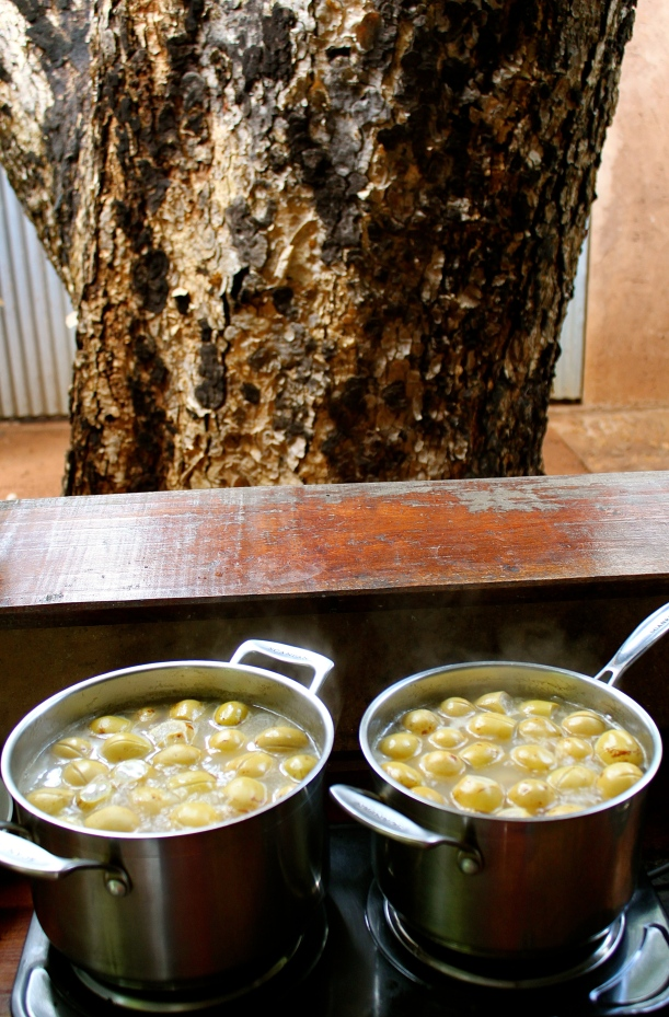 Boiling the marula fruit before hanging them overnight.
