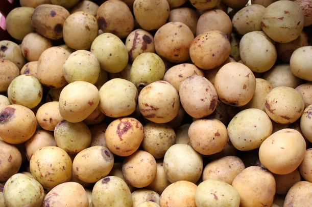 Marula fruit, collected by villagers living near the Zambezi river.