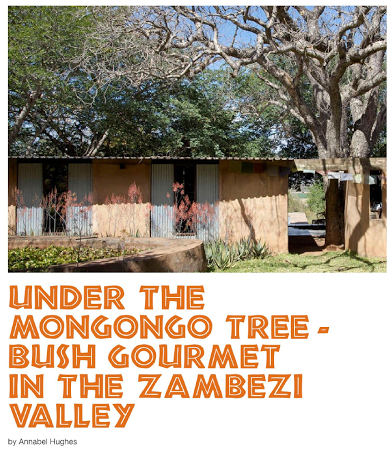 Under the mongongo tree