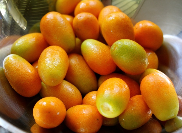 Kumquats just picked off the tree outside our kitchen.