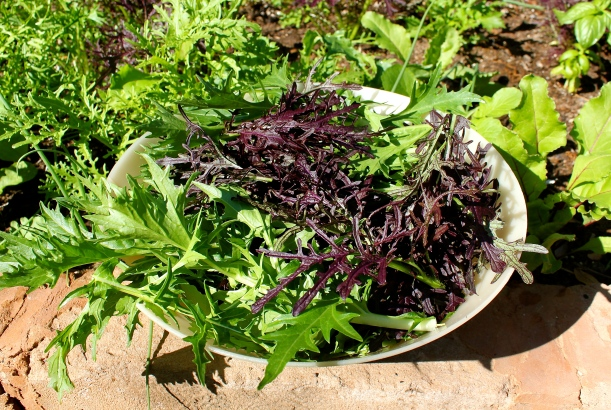 Spicy mix lettuce from our garden.