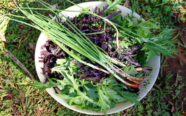 Some of the ingredients for the garden salad.