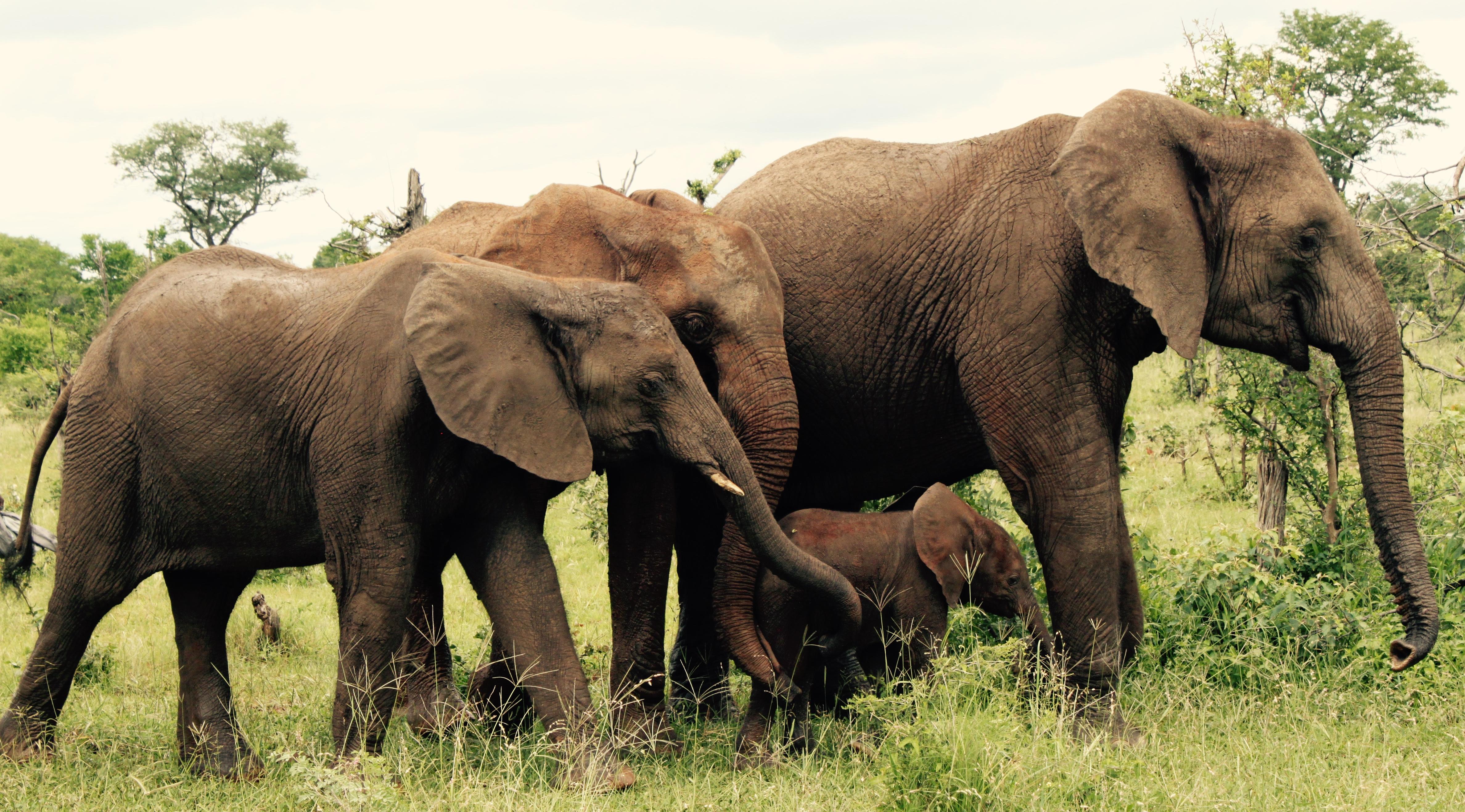 An elephant family.