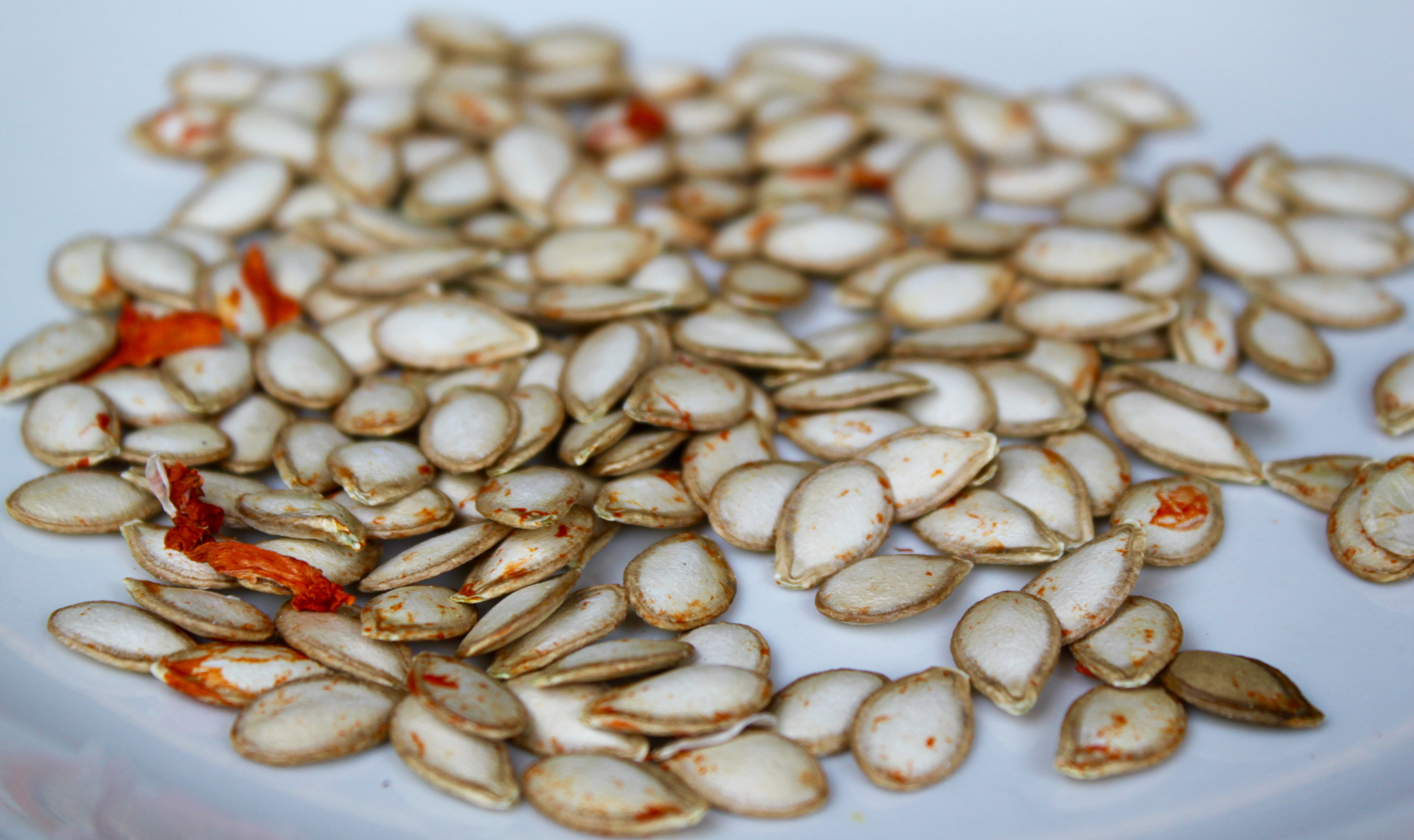 Dried butternut seeds, ready to be planted.